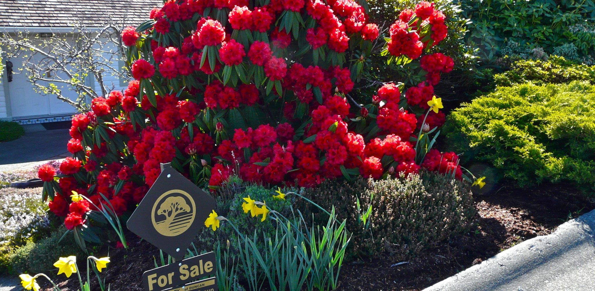 Spring For Sale BH P1150271